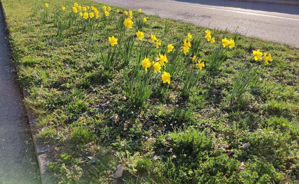 Blüten für den Frühling